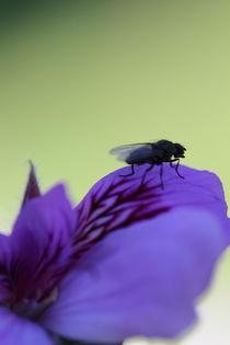 Mücke im Gegenlicht von Ralf Wolter