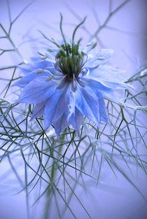 Jungfer im Blauen von Heidrun Lutz