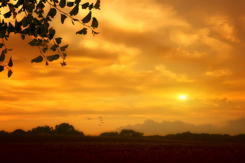 Sweet-sunset