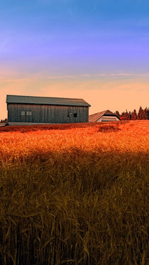 Brennende Felder des Sommers | Landschaftsfotografie by Patrick Jobst