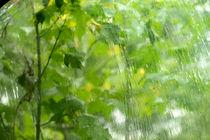 Regen von J.A. Fischer