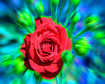 RGB ROSE by Michael Naegele