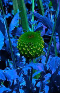 Green ball flower von Amanda Elizabeth  Sullivan