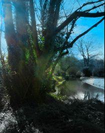 Landscape beauty von Amanda Elizabeth  Sullivan