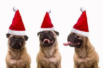 Caroling Pugs by Edward  Fielding