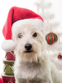 Santa Claus Dog von Edward  Fielding