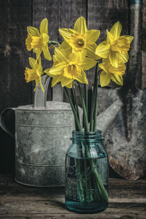 Flowers in the shed by Edward  Fielding