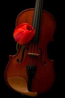 Music Lover von Edward  Fielding