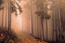 Thüringer Wald by Oliver Helbig