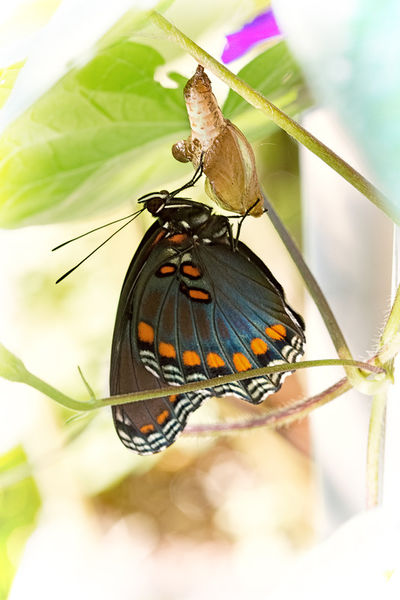 Butterfly-and-wasps-003-nowm