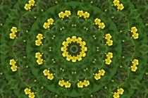 magische Blüten by alana