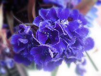 Purple floral treat by Amanda Elizabeth  Sullivan