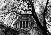 Into the trees 05 - St. Paul's Cathedral by Ian Gazzotti