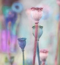 MOHN von © Ivonne Wentzler