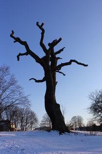 standing alone /einsamer Baum von Kathy Lemburg