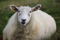 mein Lieblingsschaf - my most adorable sheep von Kathy Lemburg