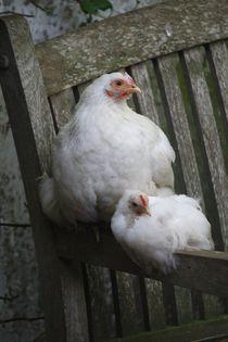 meine Lieblings Hühner, my special chicken von Kathy Lemburg