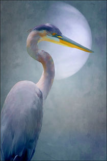 Portrait Of A Heron by tomyork