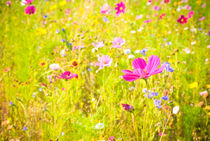 Sommerwiese by gibleho