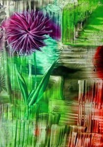 Sternentulpe by megina-art