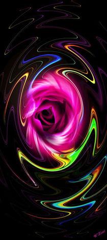 Blütenträume 20 Rose by Walter Zettl