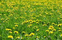 Blumenwiese im Frühling von caladoart