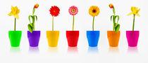 Frühlingsblumen Parade - Spring flowers parade von Thomas Klee