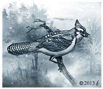 Blue Jay von richard turgeon