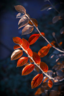 Autumn Red Branch von cinema4design