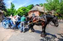 Horse and Cart by Stephen Walton