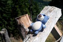 Sonnenbad für kleinen Bären von Olga Sander