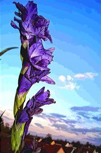 Gladiolus purple by Helmut Schneller
