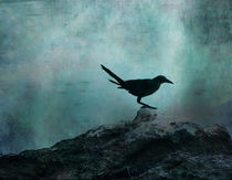 Bird-on-rock-texturized1