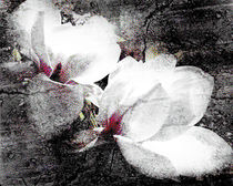 Double White b&w von florin