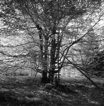 Hunter's hide in a beech tree - monochrome by Intensivelight Panorama-Edition