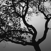 Silhouette of an apple tree at sunset - monochrome by Intensivelight Panorama-Edition