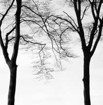 Two beech trees in spring - monochrome von Intensivelight Panorama-Edition