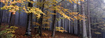 Fall forest panorama von Intensivelight Panorama-Edition