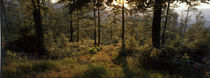 Forest path on a summer evening von Intensivelight Panorama-Edition