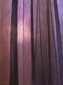 Forest night by Jessica Valner