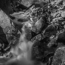 Flowing Stream by Jim DeLillo