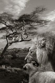 African scene von Christine Sponchia