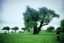 green by Joseph Borsi