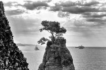 lonely tree in the sea by Joseph Borsi