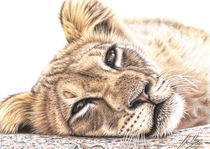 Löwenkind - Young Lion by Nicole Zeug