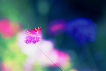 kleiner Schmetty im bunten Wunderland by die-farbenfluesterin