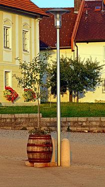 Ein Baum im Mostfass | Konzeptuelle Fotografie von Patrick Jobst
