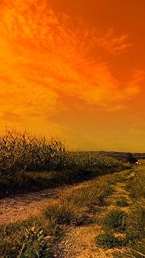 Ein Spaziergang in den Abend | Landschaftsfotografie by Patrick Jobst