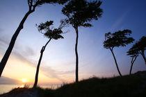 Sonnenuntergang auf dem Darß by Jens Uhlenbusch