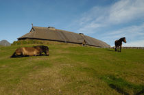 Viking longhouse with horses von Intensivelight Panorama-Edition